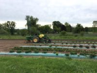 Early June fields at Cobblestone Creek Farm in East Syracuse.